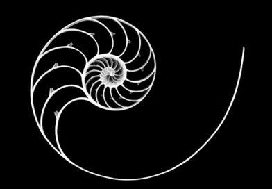 Interscalar: Ölçekler Arası Yaklaşım İle Yaratılıştaki Sır